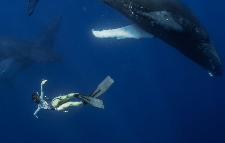Swimming with whales in French Polynesia