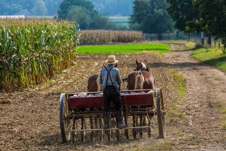 amish-farmer-shutterstock_221091484