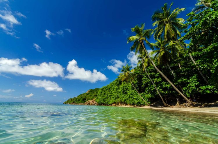beach-palms-san-andres-y-providencia-colombia-shutterstock_128705441