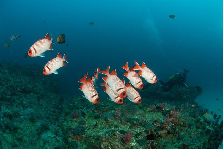 blotcheye-soldierfish-shutterstock_76991482