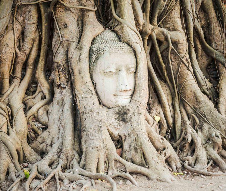 buddha-head-tree-wat-mahathat-ayutthaya-thailand-shutterstock_303034259