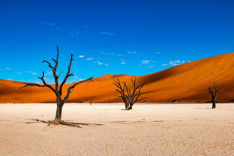deadvlei-sossusvlei-namib-naukluft-park-namibia-shutterstock_1038660217