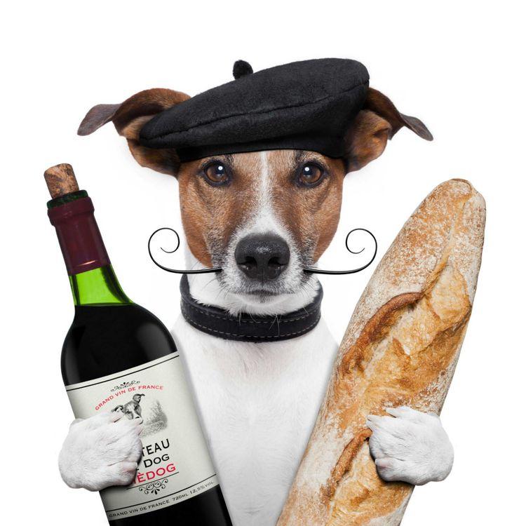 dog-baguette-beret-france-shutterstock_112586528