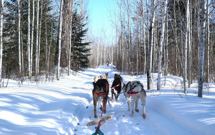 Dog sledding, Gunflint area, Minnesota, USA