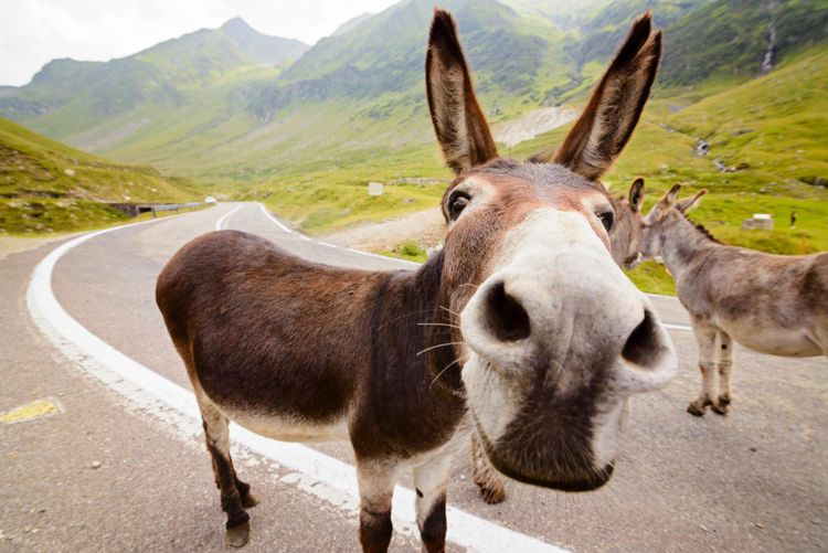 donkey-road-mountain-romania-shutterstock_462897025