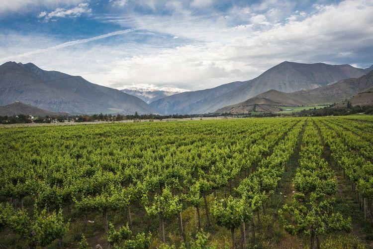 elqui-valley-chile-wine-region