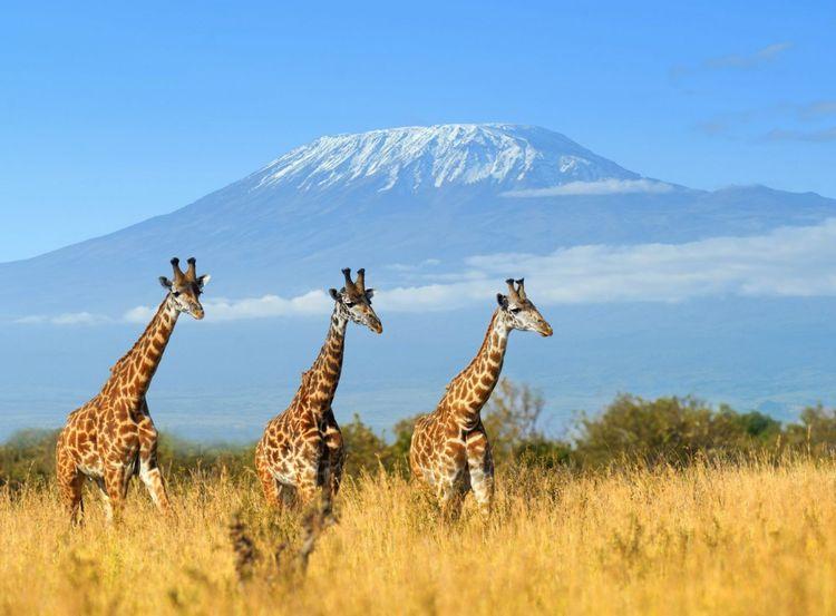 giraffe-kenya-africa-shutterstock_361016000