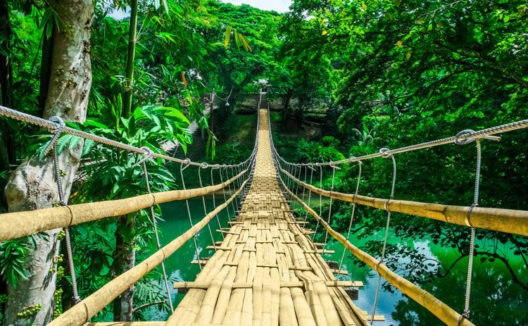 hanging-bridge-forest-bohol-philippines-shutterstock_458089186