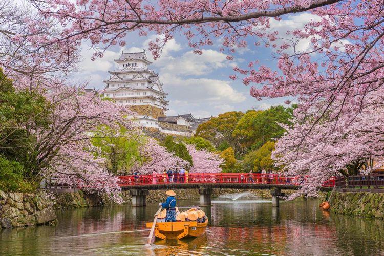 japan-sakura-osaka-cherry-blossom-shutterstock_1244767039