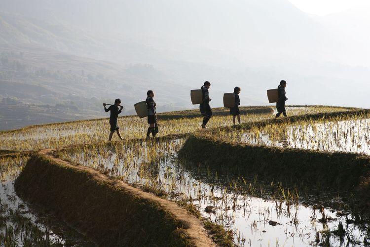 landscape around sapa, northwest vietnam.