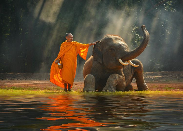 monk-elephant-thailand-shutterstock_539708797