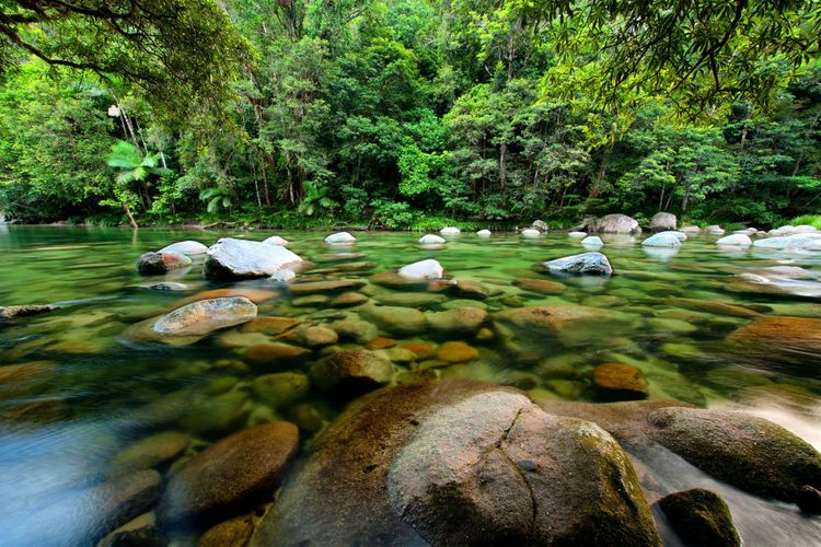 Mossman-River-Australia-rainforest