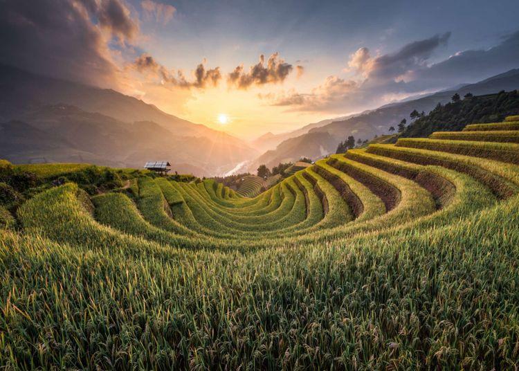 rice-terrace-mu-can-chai-vietnam-shutterstock_1345924820
