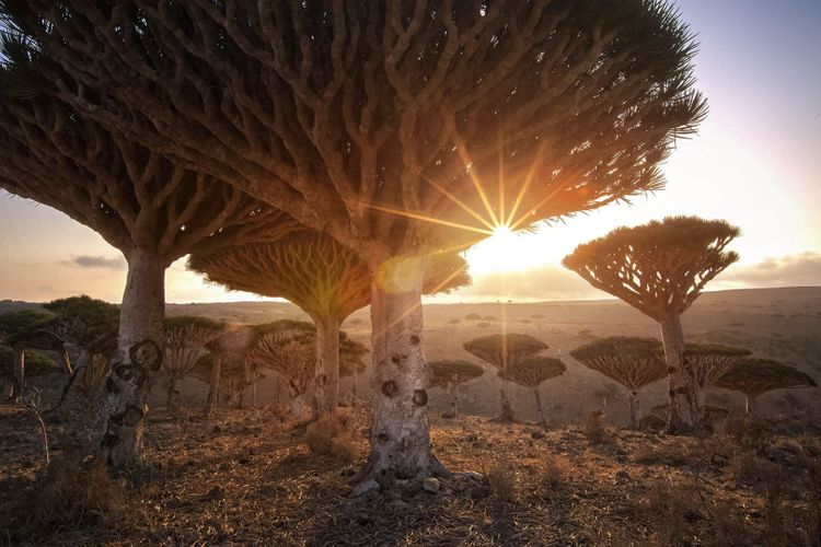 You won't forget the dragon trees of Socotra Island