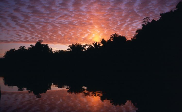 Sunset with high clouds in the Bolivian jungle near Chalalan lodge