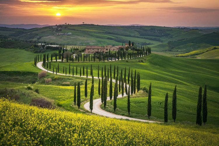 tuscany-road-cypress-tree-shutterstock_1299407743