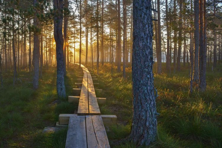 viru-bog-estonia-shutterstock_347534174