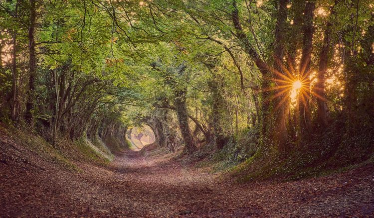 west sussex tunnel trees beautiful sunsets